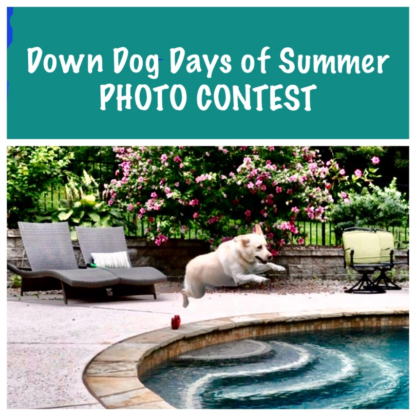 Down Dog Days of Summer Photo Contest:
